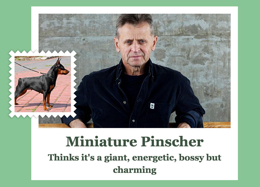 Mikhail Baryshnikov ( Russian-American dancer, choreographer, and actor) as Miniature Pinscher.