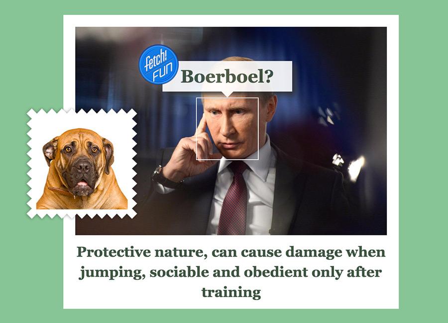 President Vladimir Putin as Boerboel.