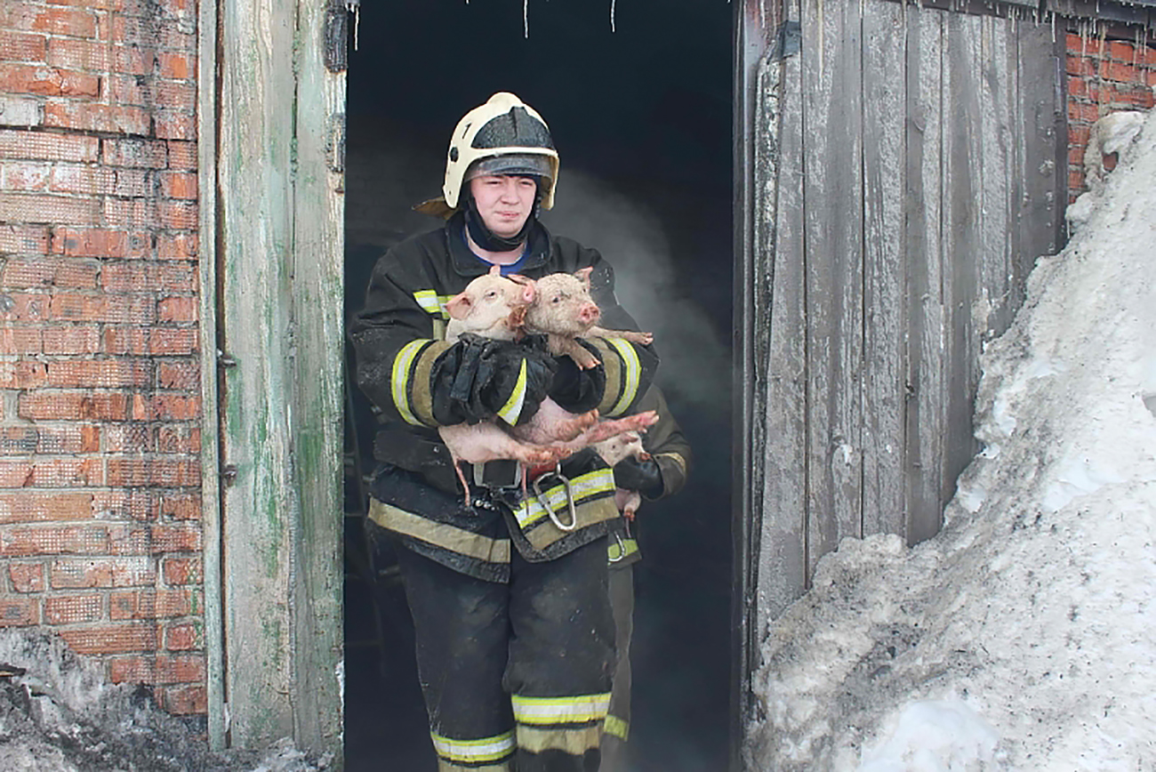 Tomsk firefighters rescued 150 animals.