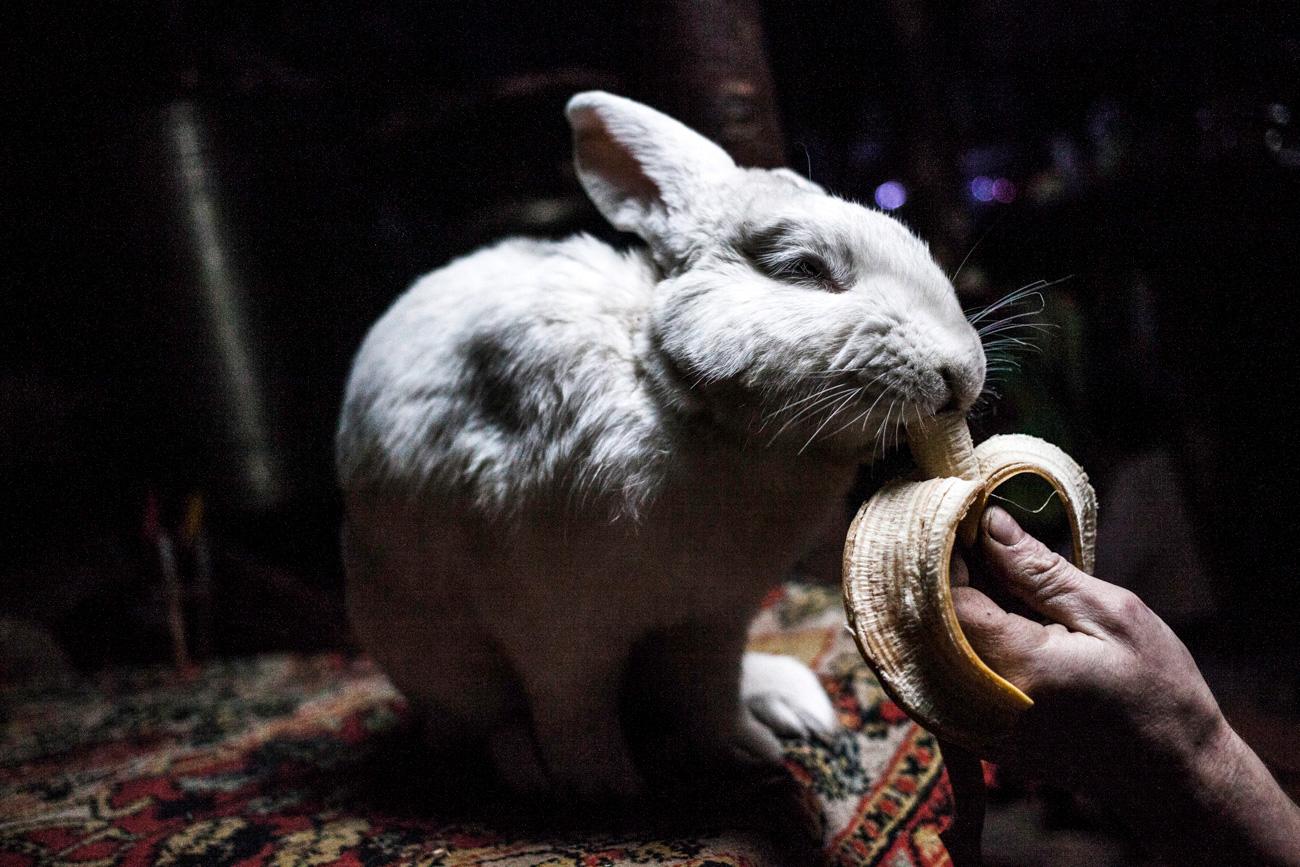 Vive in compagnia di un coniglietto addomesticato di nome Petrusha, che ama mangiare kasha e banane