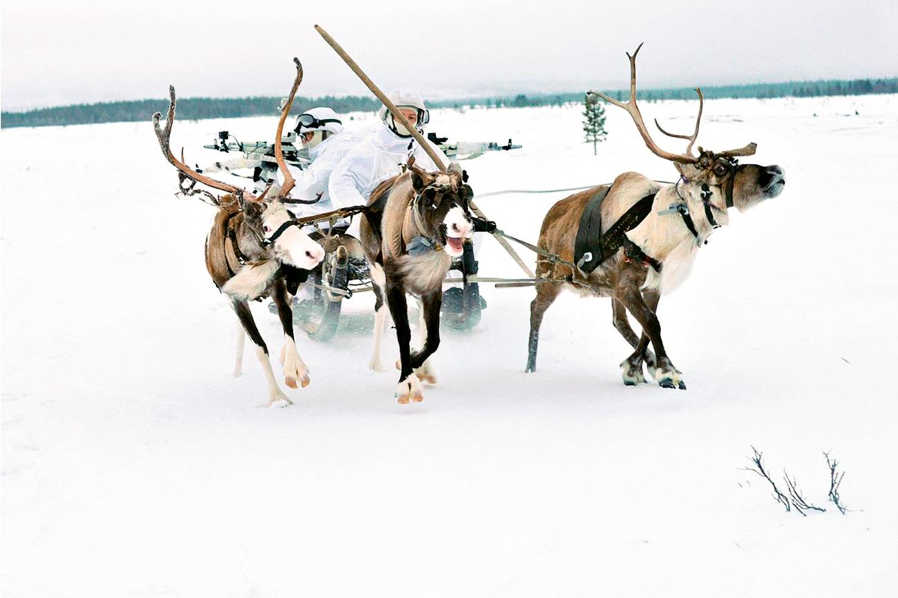 A divisão foi formada a partir da 80ª brigada motorizada, localizado em Alakurtti (também na região de Murmansk). A expectativa agora é criar uma segunda brigada no distrito de Iamalo-Nenets, situado mais a leste.