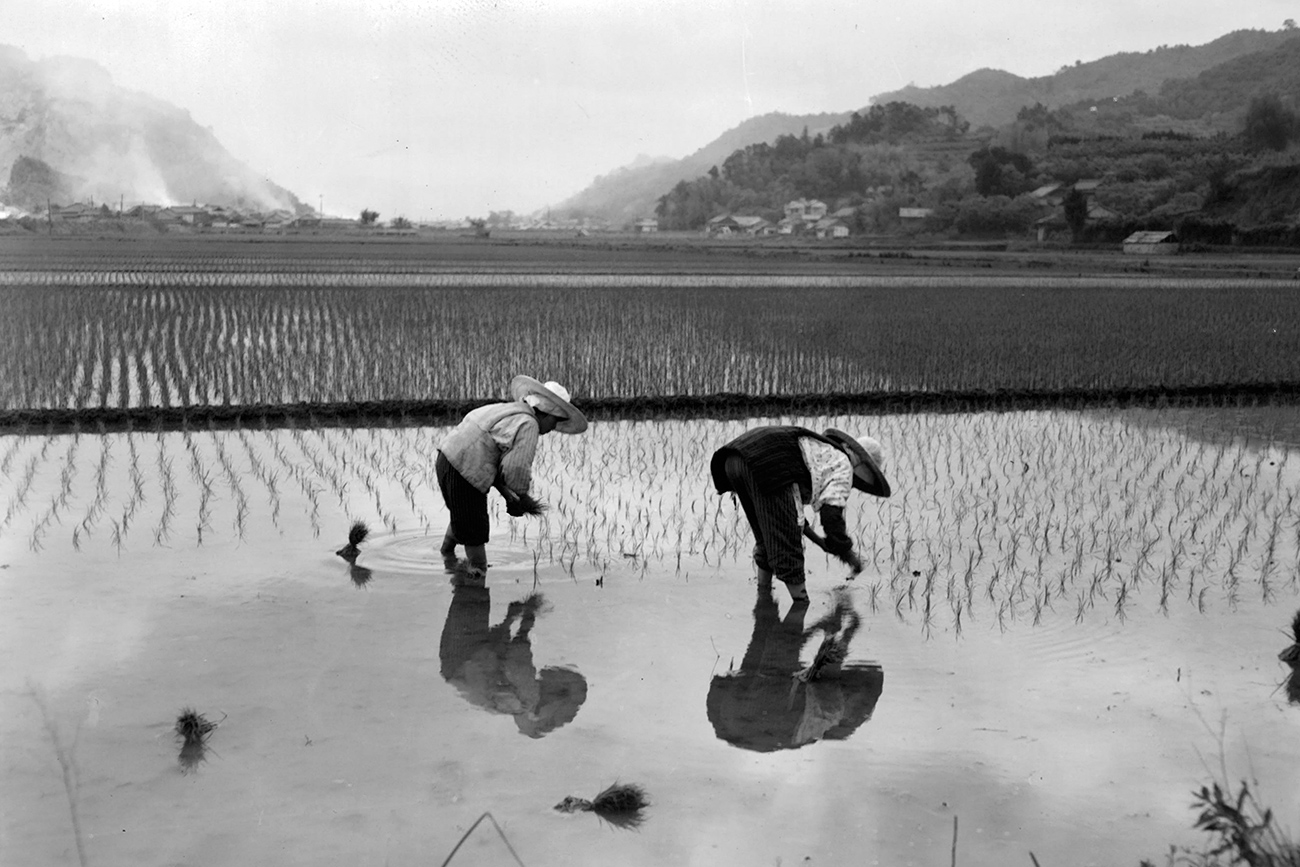 Major land reforms were implemented in Japan after World War II. The above picture shows rice farmers in Kochi in 1955.