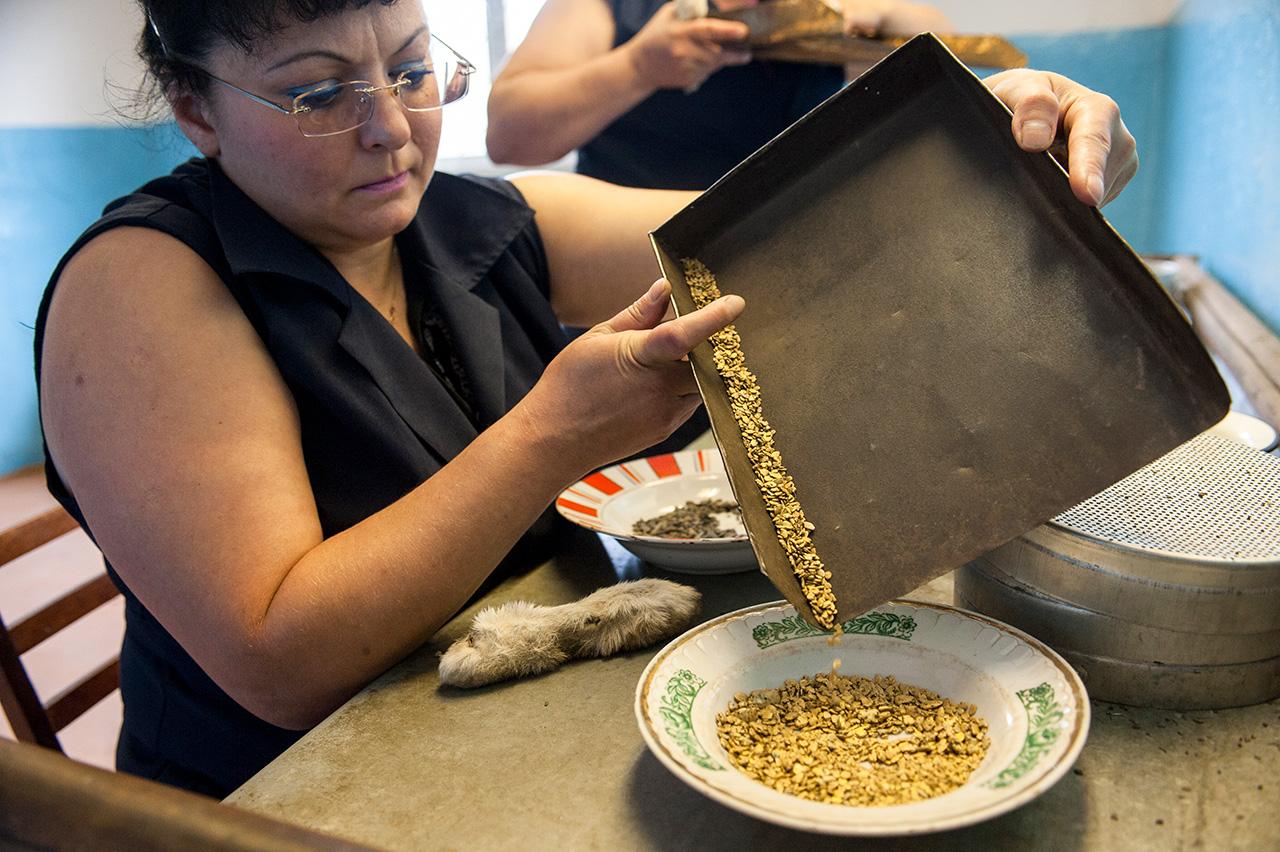 In Russland ist ausschließlich die industrielle Goldförderung erlaubt. Der Staat vergibt Konzession an Großkonzerne.