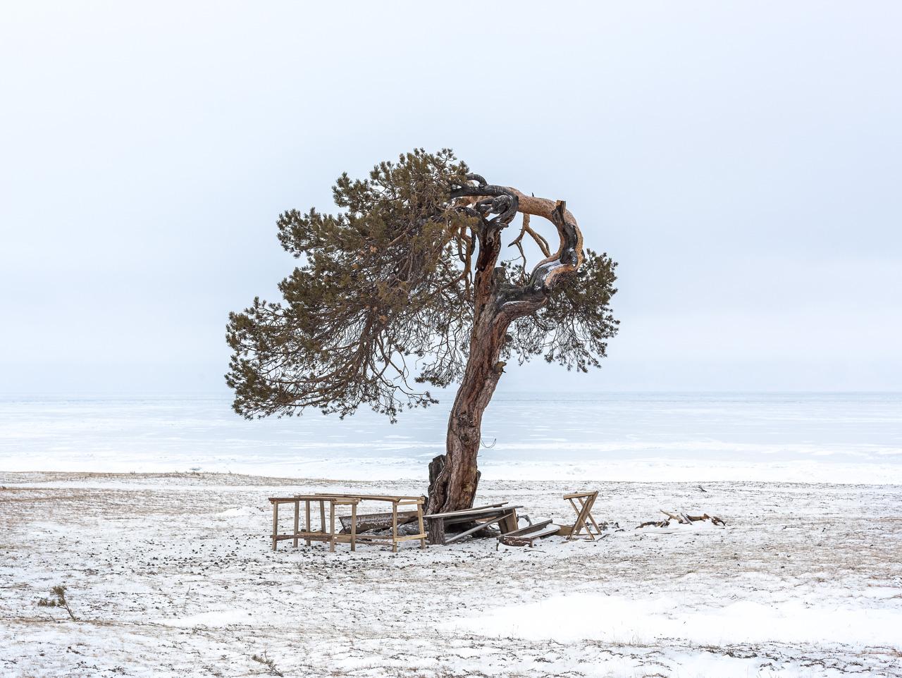 """I forti venti che soffiano sull'isola piegano gli alberi. Per questo la gente del posto li chiama """"gli alberi che camminano"""""""
