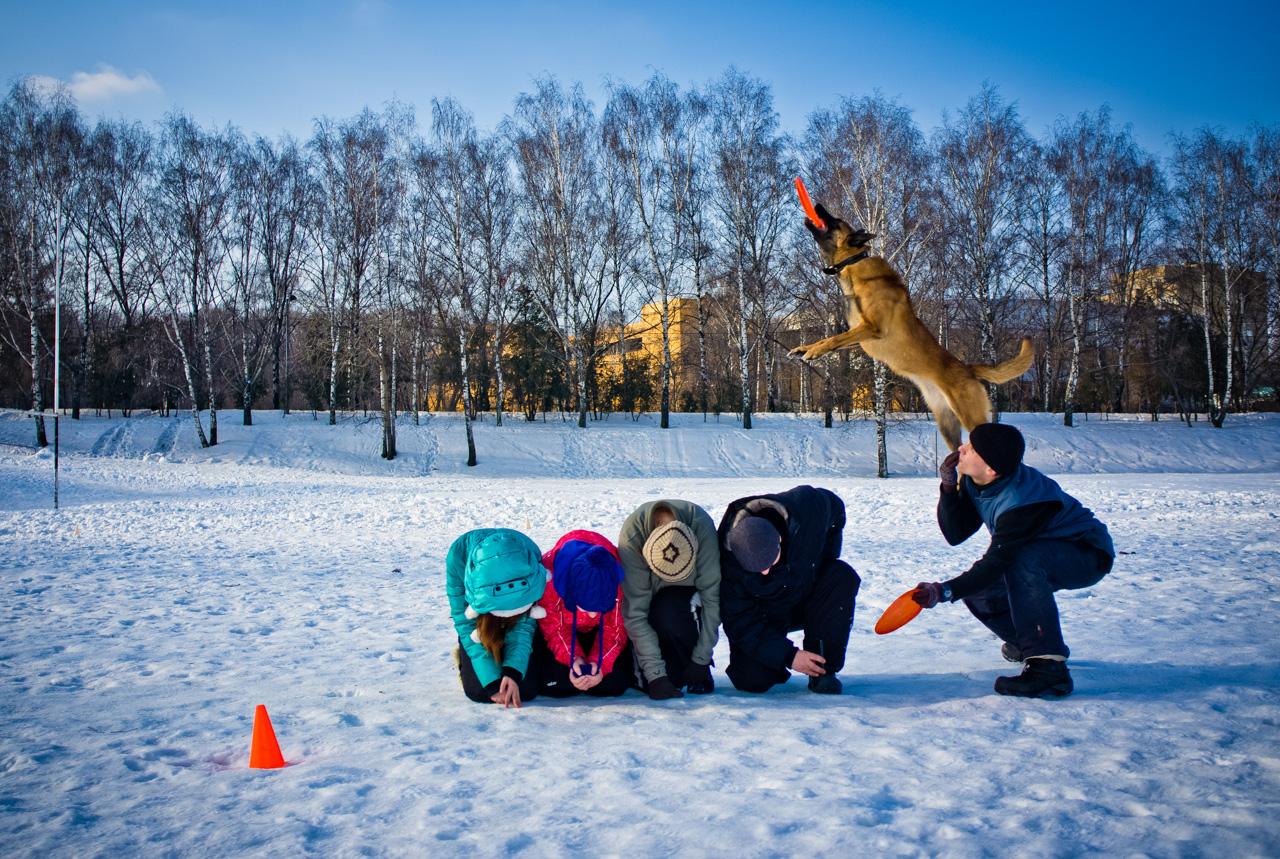 Secondo gli esperti, non esiste una razza di cani particolarmente predisposta per questo sport: con frequenti allenamenti, qualsiasi cucciolo può diventare un campione