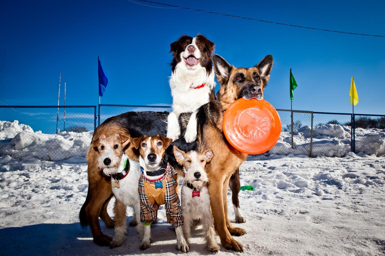 Non c'è da stupirsi infatti che molti campioni di Disc Dog siano proprio cani adottati in un rifugio