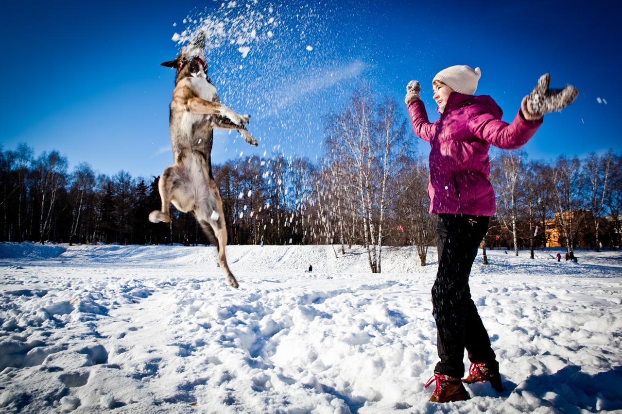 La regola più importante è che il cane deve godere di buona salute