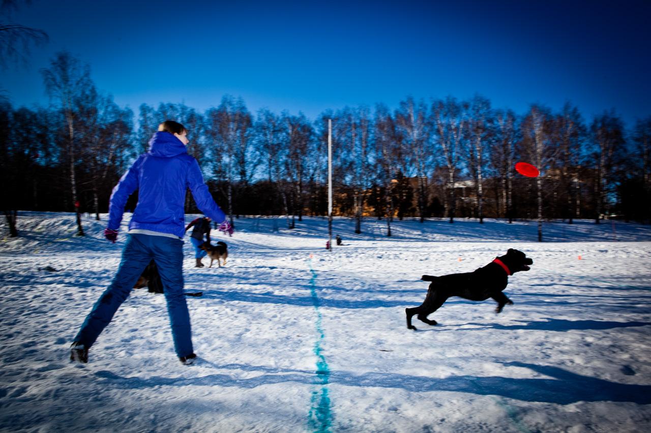 Prima di cimentarsi è importante sottoporre il cane a una visita veterinaria di controllo per essere sicuri che non ci siano per lui controindicazioni