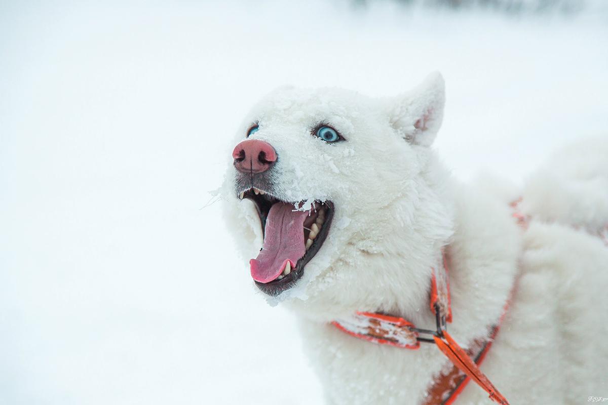 Apuesto a que la nieve no te gusta tanto como a mí. Fuente: Fox Grom