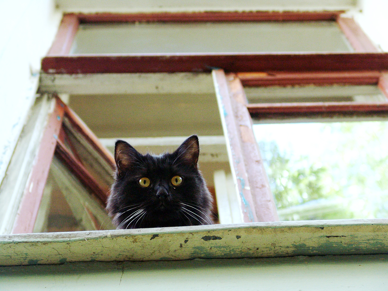 A black cat, the inhabitant of the Bulgakov House cultural center.