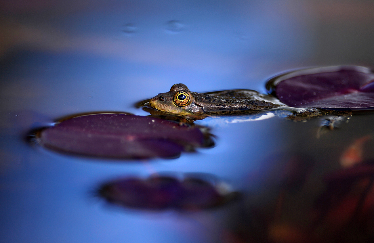 In the summer people kept an eye out for flowers closing, frogs croaking in ponds, crawfish crawling onto riverbanks and finally, long, continuous spells of thunder. Source: Konstantin Chalabov/RIA Novosti