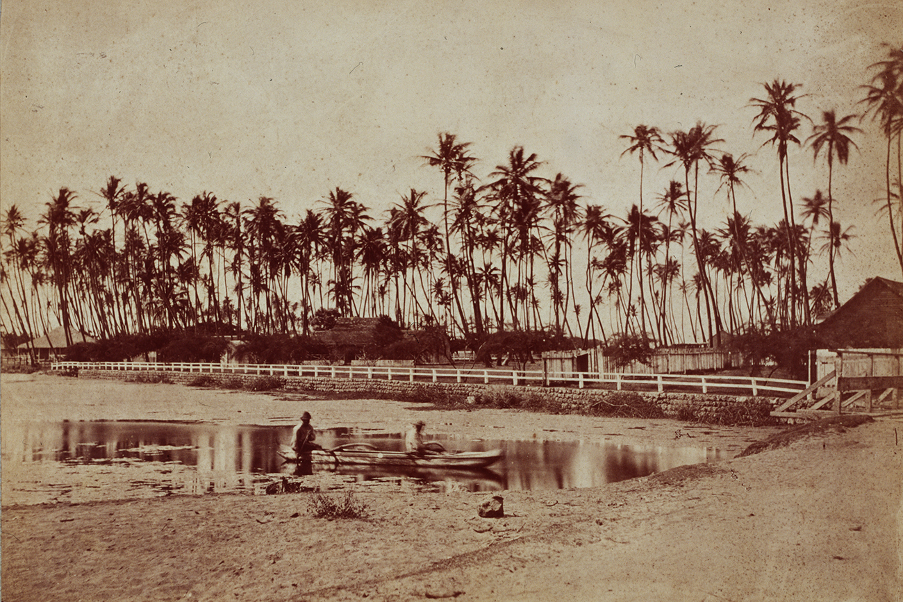 Two men paddle a small open boat in a pond in front of a coconut grove. Waikiki, Hawaii, ca. 1890. Source: Getty Images