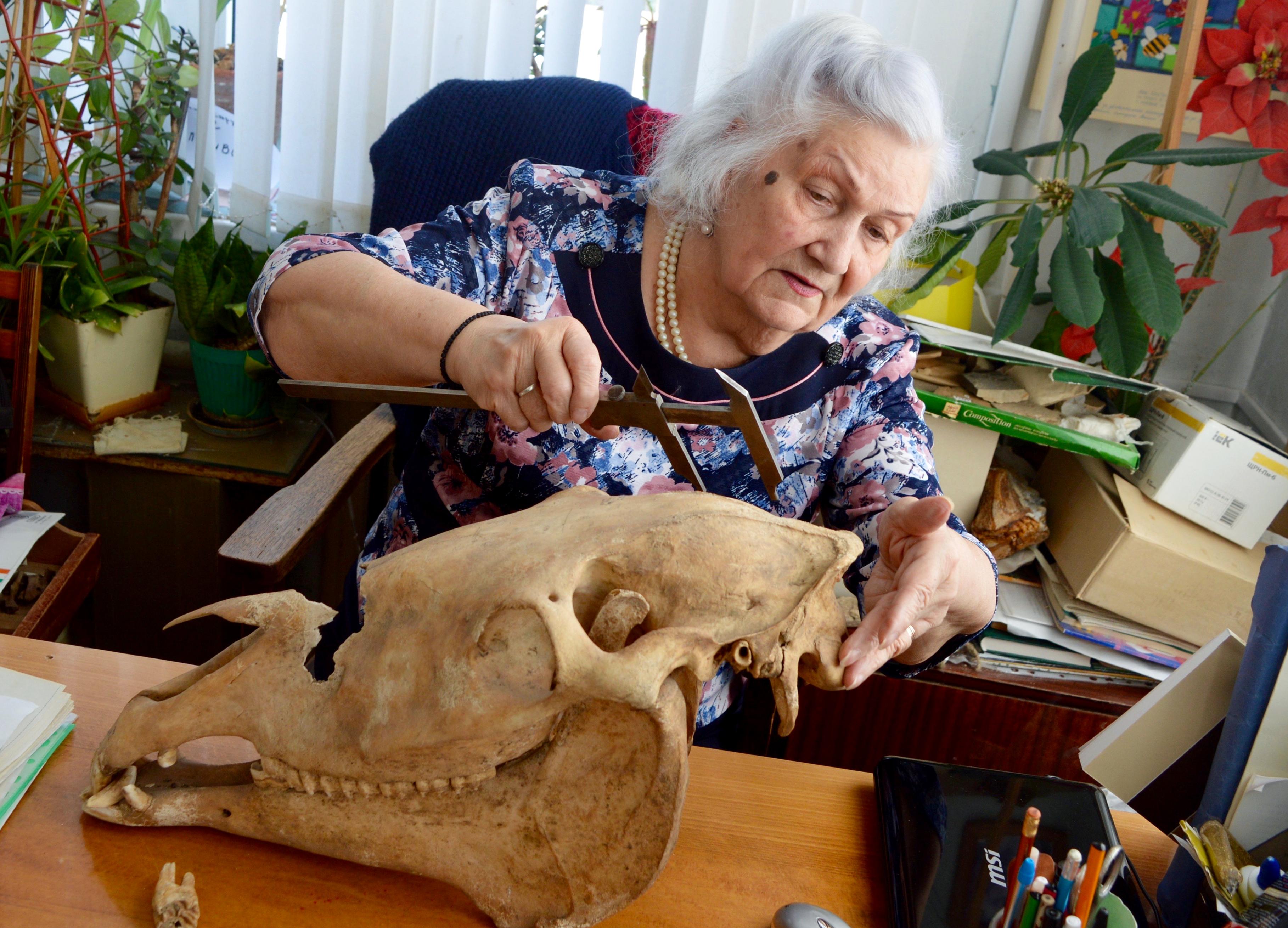 シュヴィリョワ氏の作業の様子。机の上には中世のウマの頭蓋骨。この1ヶ月前、リゾート地キスロヴォツク近くで発見された。