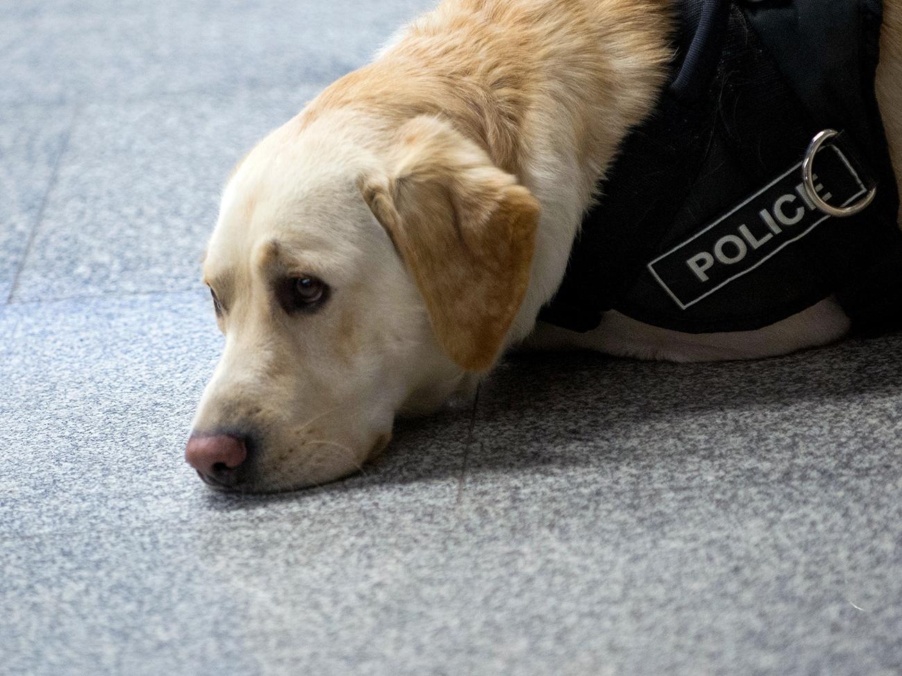 Un cane poliziotto\n