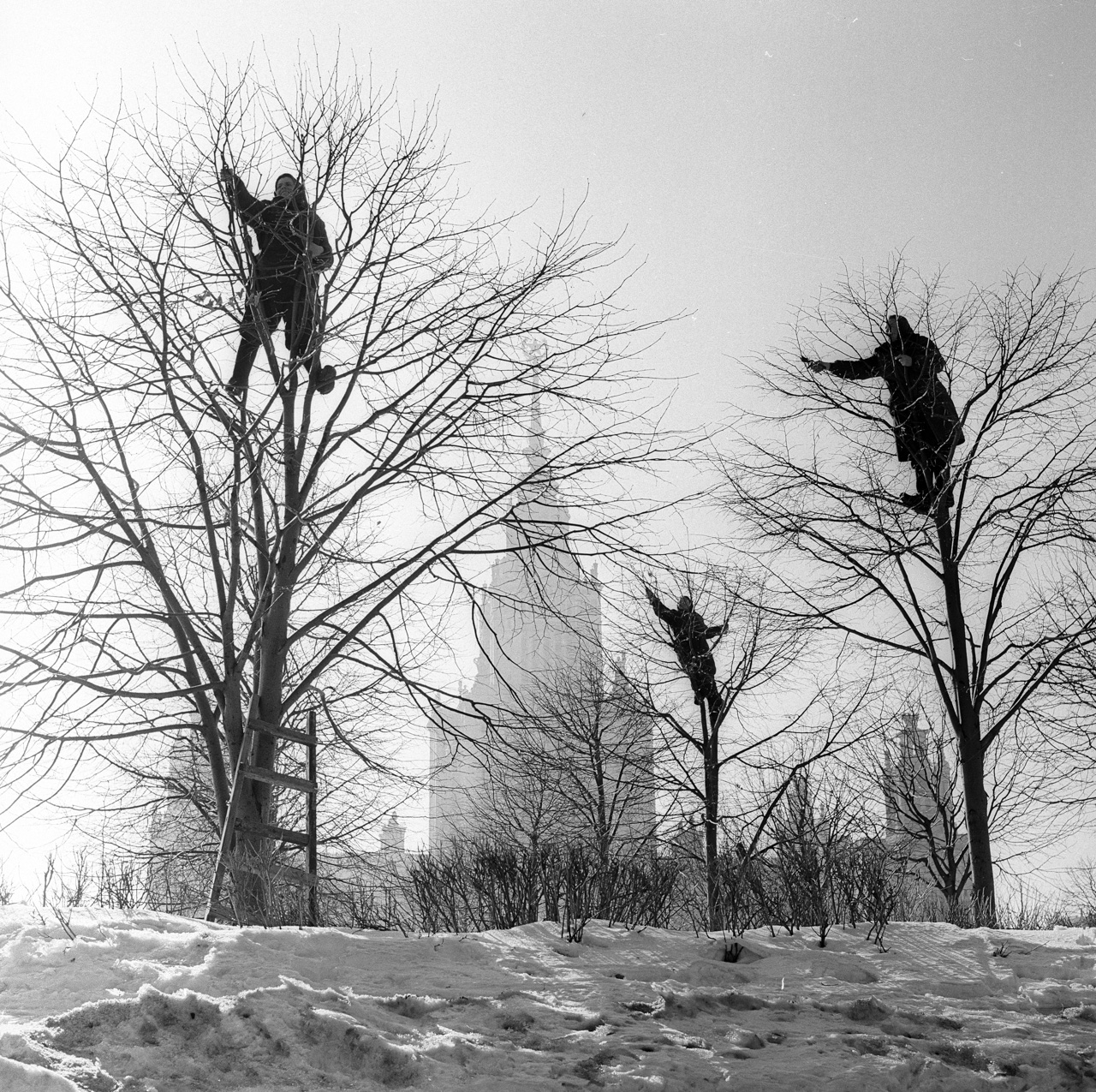 """The Rooks Have Arrived."" Spring in the park of Moscow State University, 1960 (courageous Soviet women cut trees on Lenin Hills)    In 1960, Akhlomov took part in an exhibition of young photographers at the Moscow Central House of Journalists."