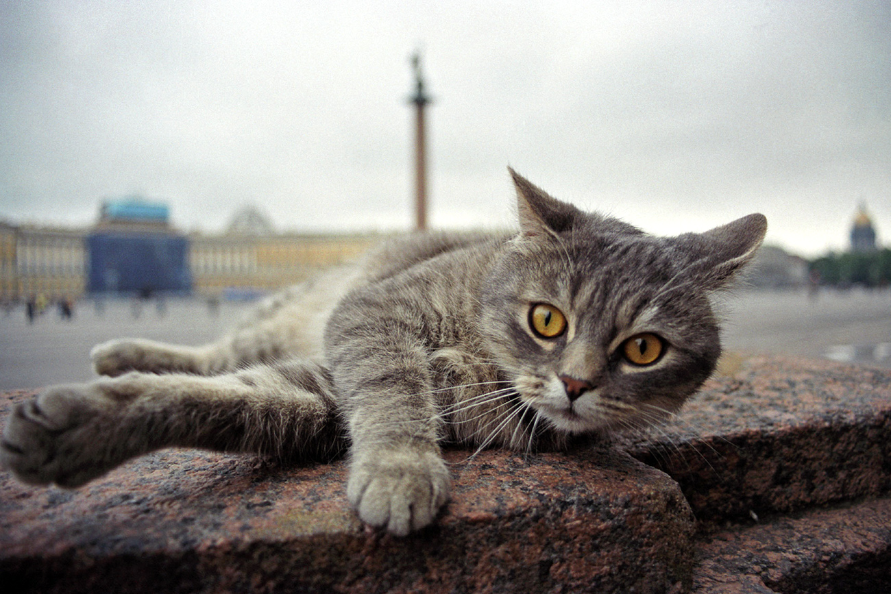 From fairytale characters to Hermitage cats, felines play an important role in Russian culture.