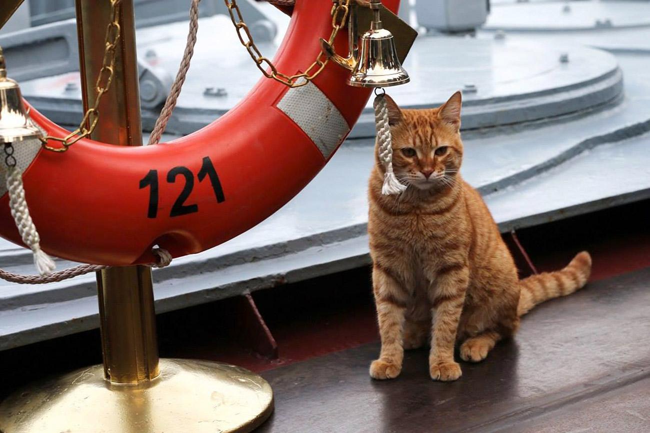 Первый кот, участвовавший в дальнем походе боевых кораблей ВМФ России к берегам Сирии