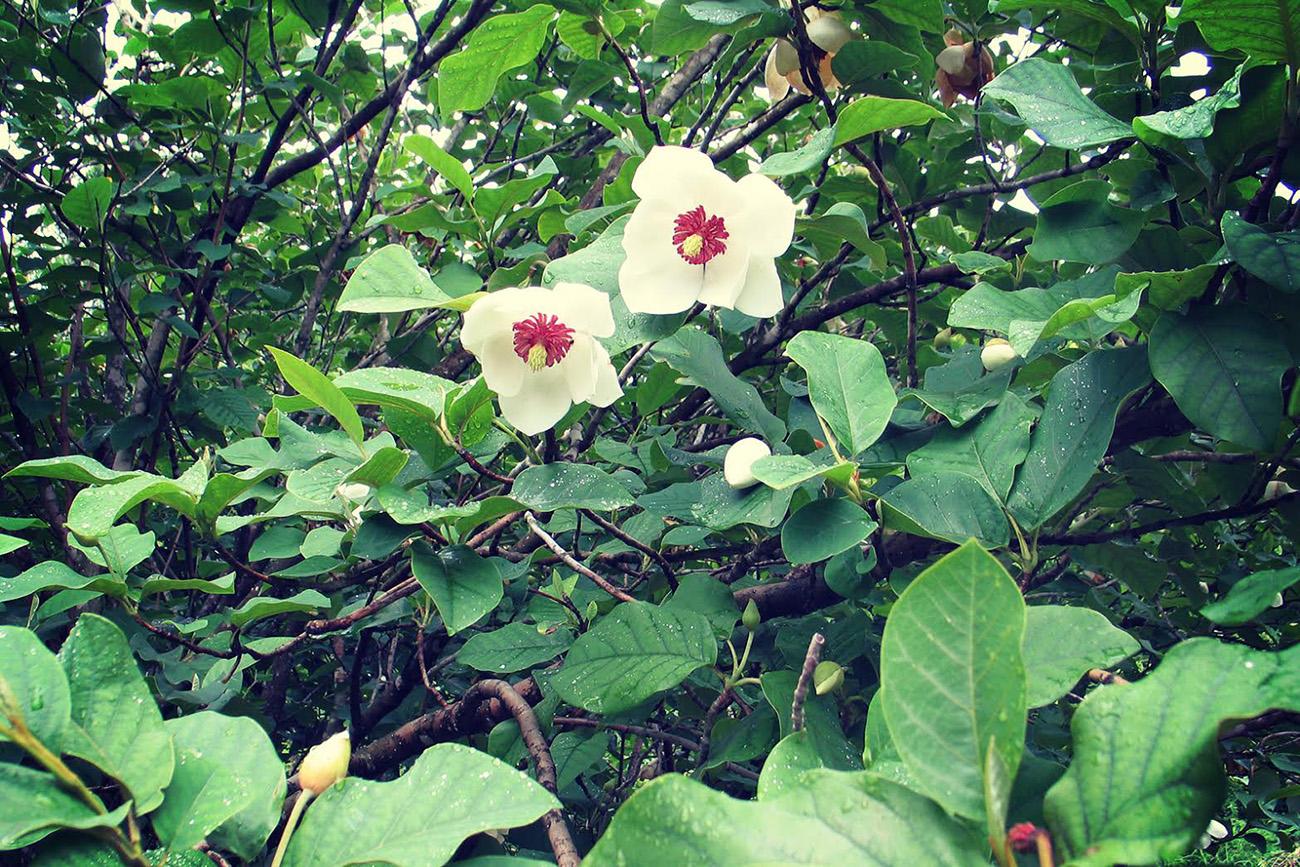 Fonte: Giardino botanico