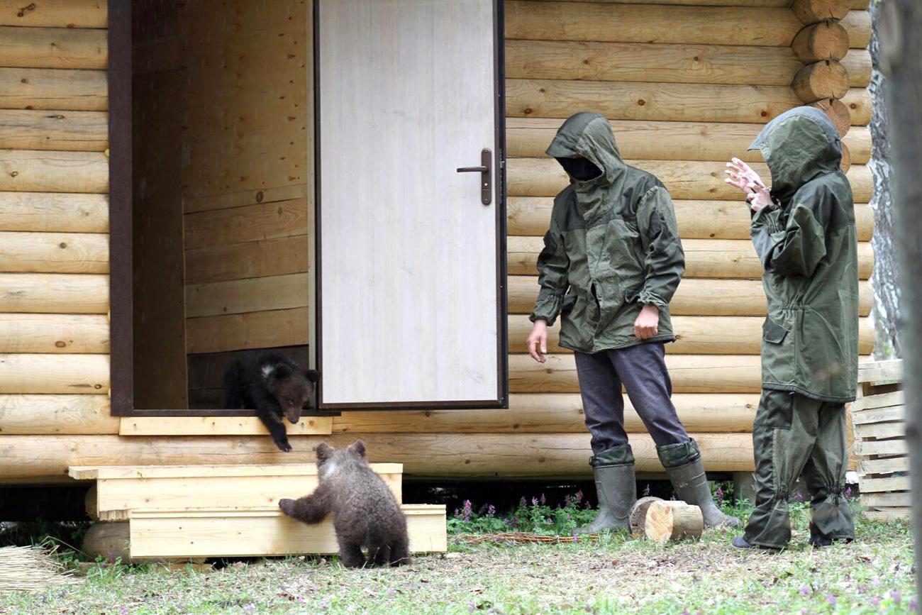 アドゥイグを国立公園で出会った二頭の子グマは最初、多くなストレスを受けた。=スタニスラフ・シャホフ撮影