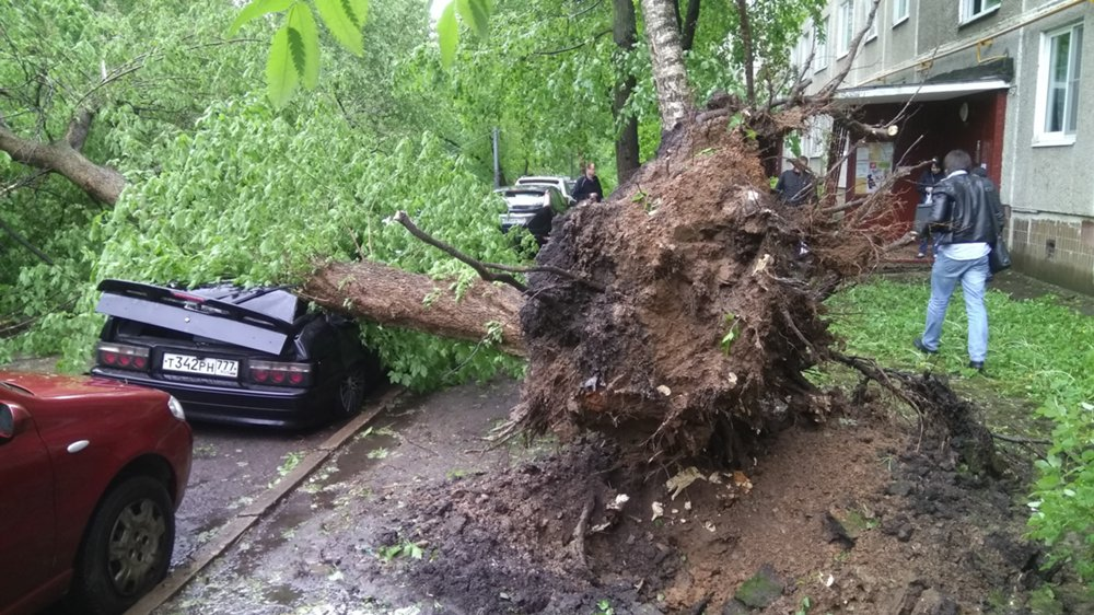 Several hundred trees were toppled in violent thunderstorms. / Photo: Sergei Kiselev / Moskva Agency