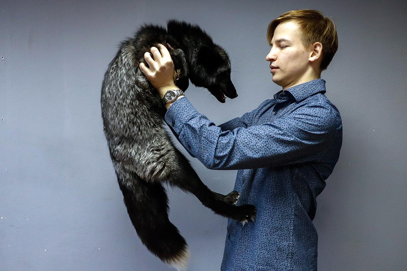 Evguêni Mikhin e sua raposa prateada, Eblis, que foi comprada de um instituto ligado à Academia Russa de Ciências