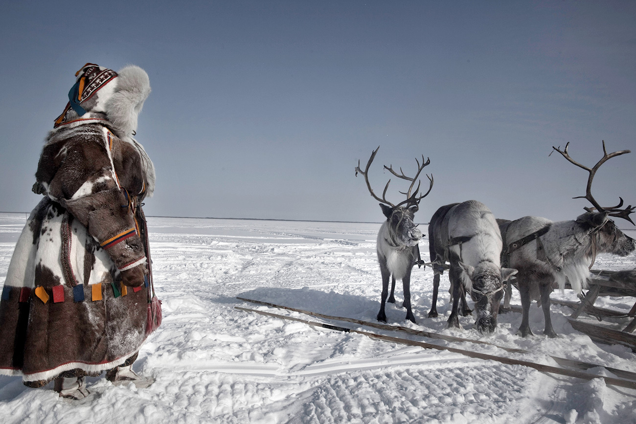 A Russian Nenet woman next to reindeers dueing spring celebrations near the vilage of Aksarka at the Yamal peninsula.