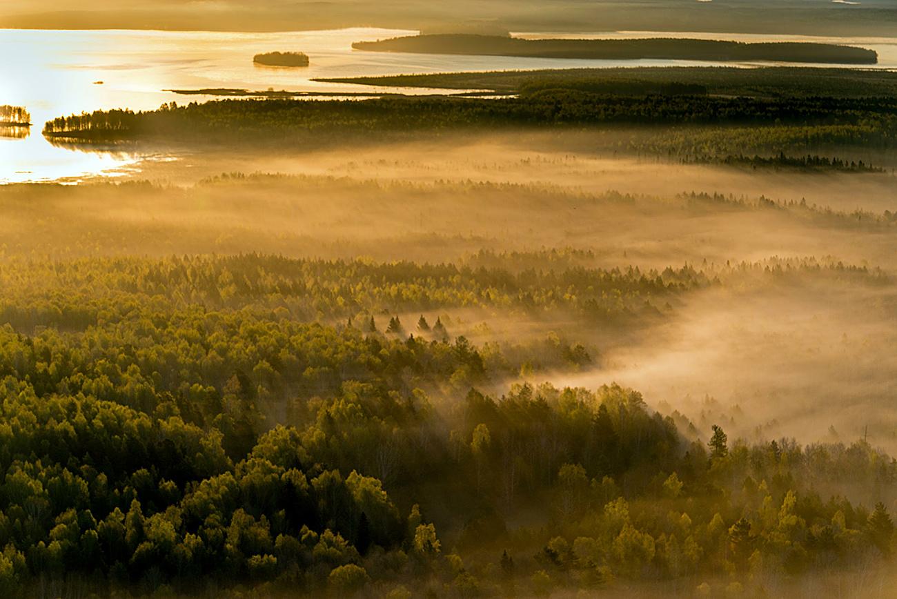 Gozdovi tajge.