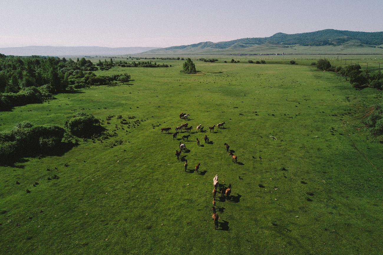 Les habitants ont demandé au photographe Maxim Tarassov de retrouver leur cheval disparu à l'aide de son drone doté d'une caméra, et voici ce qu'il a capturé.