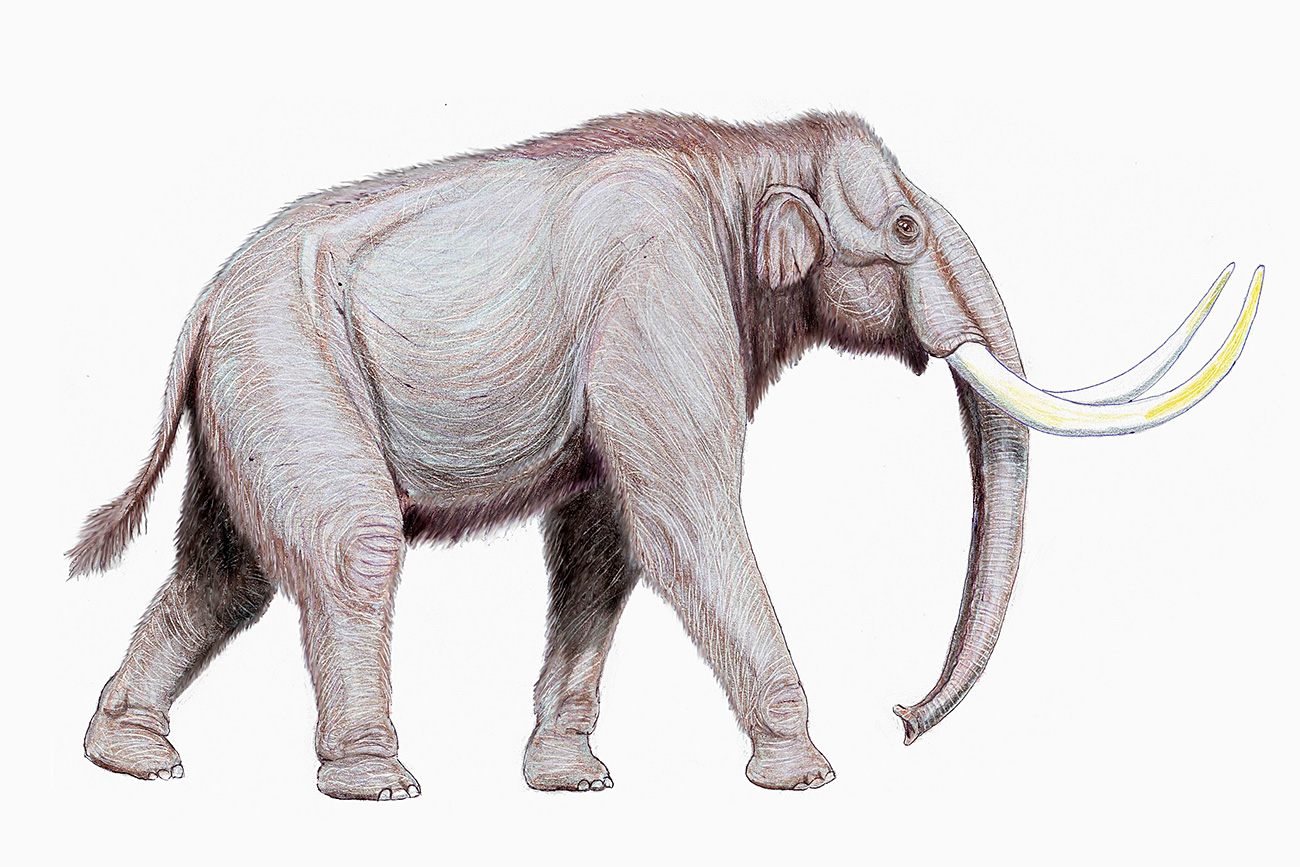 Mammuthus trogontherii.