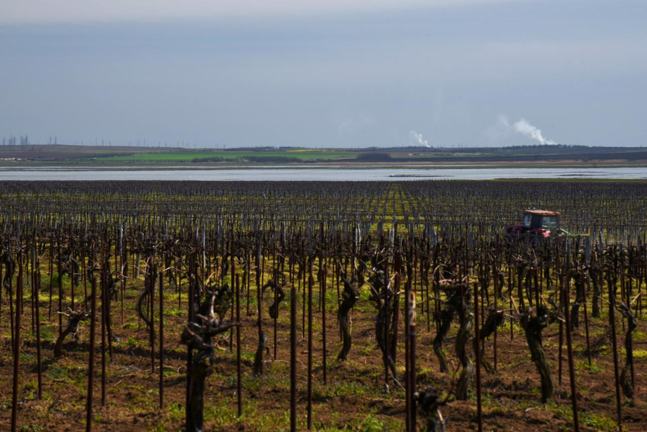 Fanagoria est l'une des plus grandes régions russes productrices de vin. Elle est située sur la péninsule de Taman, entre la mer Noire et la mer d'Azov, dans la région russe de Krasnodar. Ses vignes s'étendent sur plus de 2 800 hectares et produisent plus de 20 millions de litres de produits alcoolisés par un.