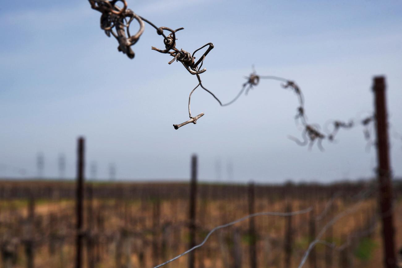 Le vignoble de Fanagoria doit son nom à la ville grecque antique de Phanagoria, qui vit le jour ici au VIe siècle avant JC et disparut au Moyen-Age suite à l'invasion des Rus.