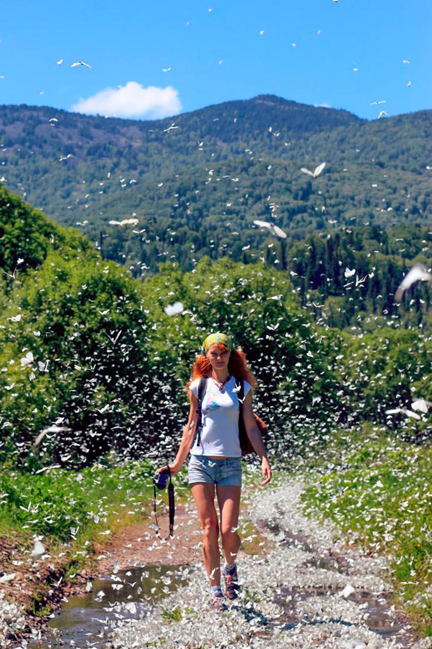 アルタイ国立大学のイリーナ・クドリャシェワ氏は、2015年と2016年の例年にない暑い夏がこの地域の蝶の個体数を急増させたと考える。このような急増の原因がなんであれ、数千匹の白い蝶が飛ぶ写真は、不思議の国のアリス風の夢のようだ。