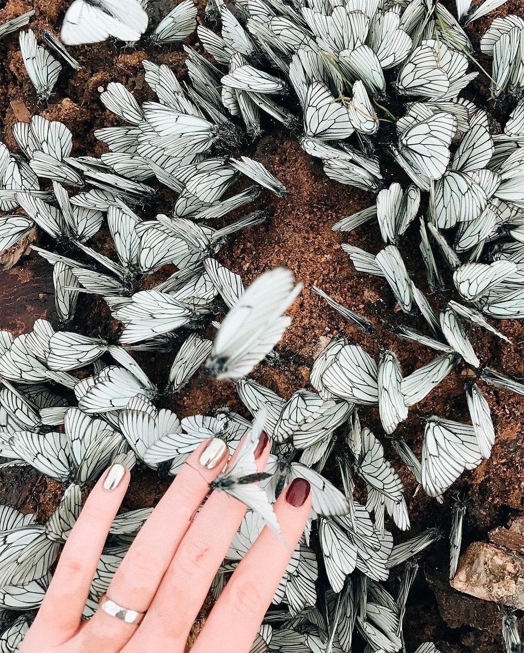 別の美しい自然現象は、エゾシロチョウと関係している。さなぎの段階を終えると、まるで出血しているかのように、木の葉では赤い液滴が乾燥する。雨が強く降ると、液滴は「血の雨」に変わる。シベリアは写真家のメッカとして、まだまだ驚かせてくれそうだ。