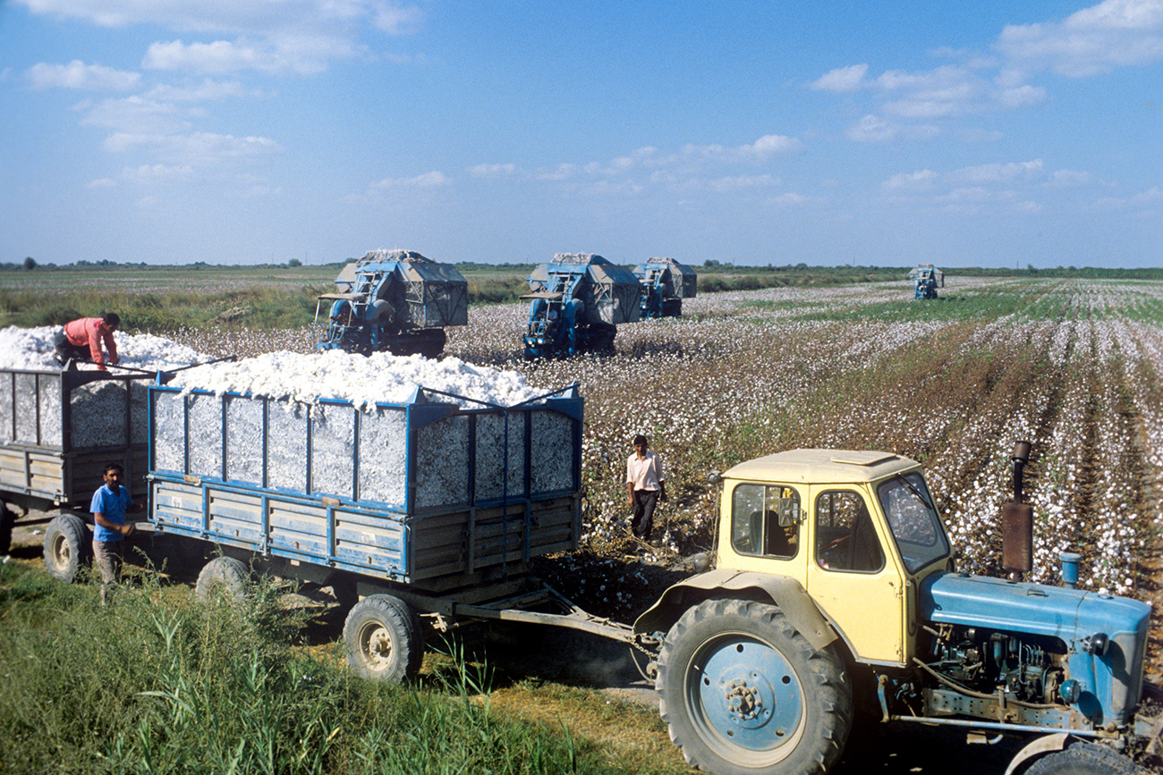 This commitment literally sold the people into servitude. Almost everyone was involved in the gathering of cotton. Even children stopped going to school until the last strand of cotton had been handpicked in the fields. // Azerbaijan SSR, 1979