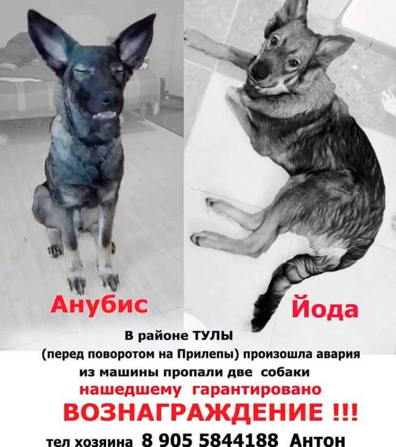 Gli annunci con le foto dei cani nel corso della ricerca. Fonte: @perecosyak