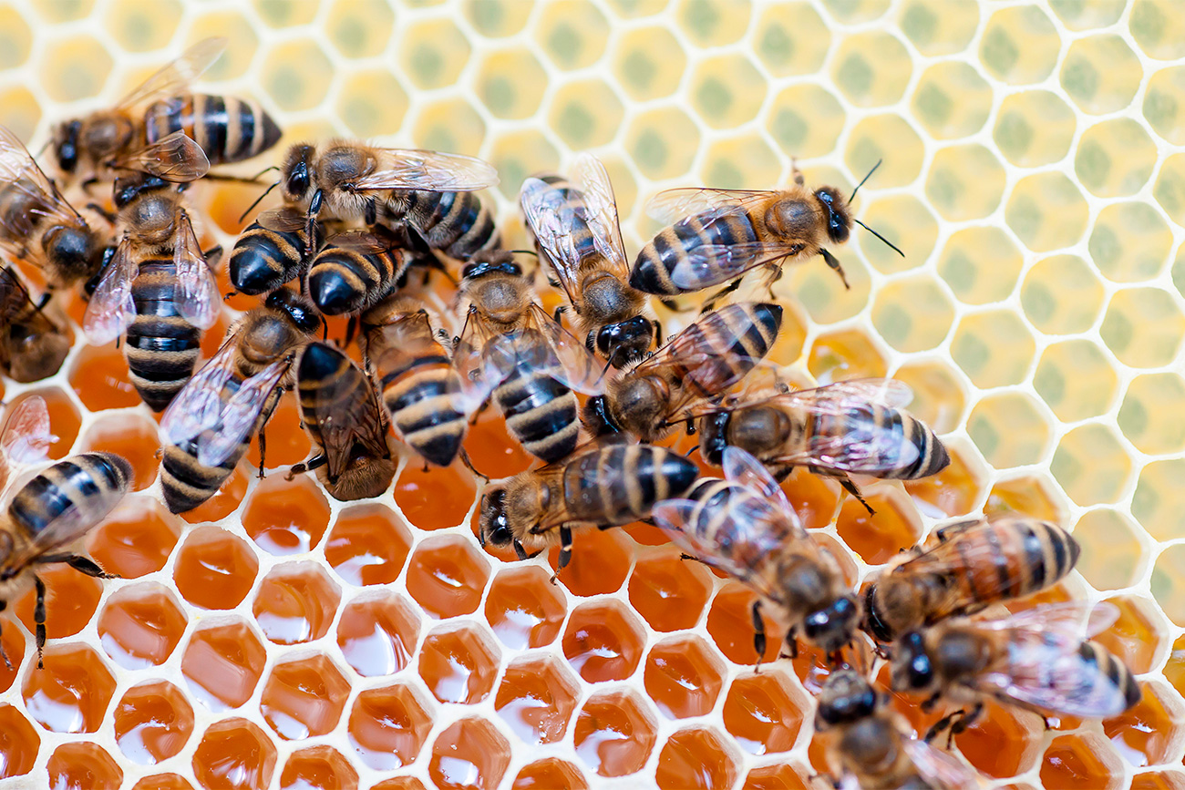 Honey Spas comes from the tradition of collecting honeycomb during the summer.