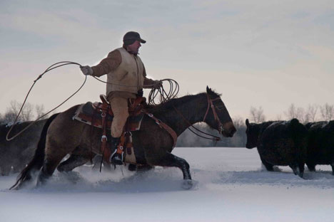 The American cowboys said that cattle imported from Montana found southern Russia's climate surprisingly hospitable, even in winter. Photo: Ryan Bell