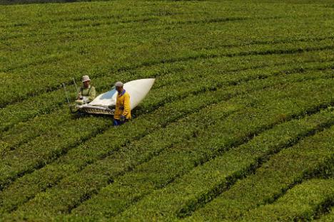 Tras el desplome de los años noventa, la economía agrícola vuelve a estar en alza. Foto de Ria Novosti