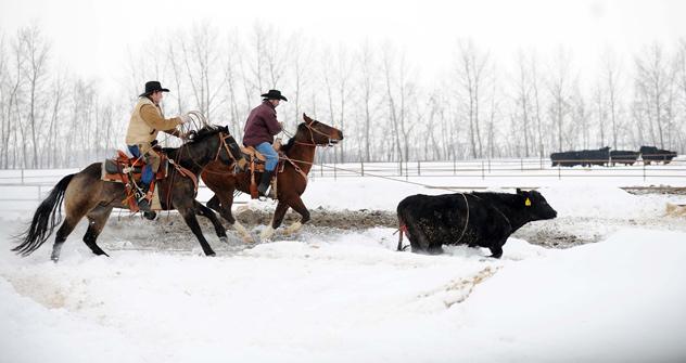 Investimento total no rancho russo tocado por norte-americanos chega a US$ 19 milhões. Além das técnicas para lidar com o gado, há lições de gestão/Foto: Ryan Bell