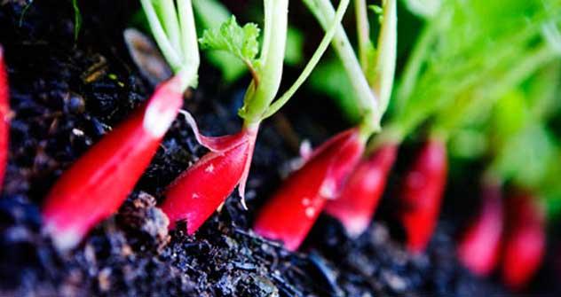 ロシアで自然食品や個人農家の生産物の需要が拡大している=タス通信撮影