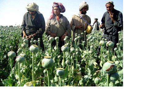 Productores en el valle de Kandahar. Afganistán esla principal fuente de heroína y otros narcóticos en Rusia.
