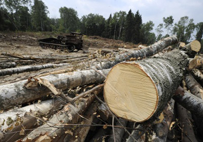 "Trees are felled in the Khimki Forest Park to make room for theconstruction of the Moscow – St Petersburg highway.""Source: ITAR-TASS / Alexei Filippov"