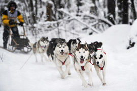 Crédits photo: Alexander Utkin/RIA Novosti