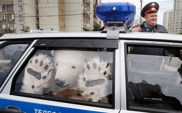 A Greenpeace activist, dressed as a polar bear, sits inside a police car after being detained outside Gazprom's headquarters in Moscow, Russia, Wednesday, Sept. 5, 2012. Russian and international environmentalists are protesting against Gazprom's plans to pioneer oil drilling in the Arctic.