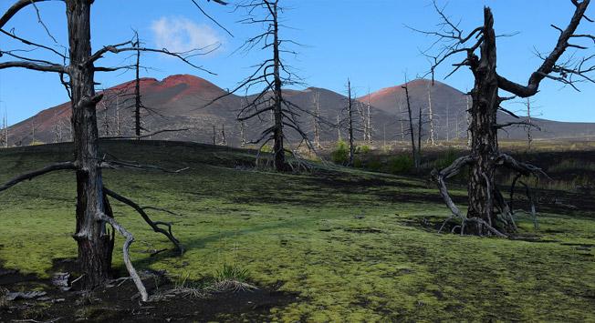 """Mrtvi gozd"" nedaleč od vulkana Ploski Tolbačik."