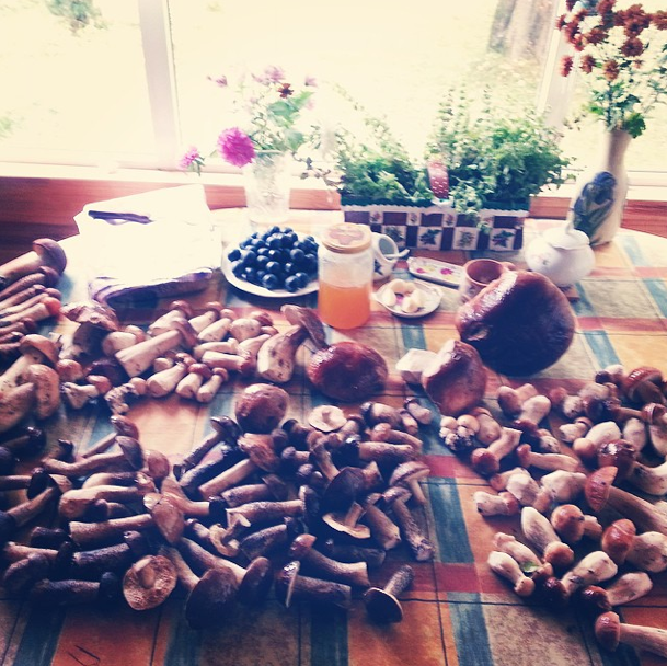 "Sunday. Our staff went mushrooming — and this is what they came back with! The main thing is not to get lost in the forest in search of such ""treasure"" and don't end up in one of the most frightening and mysterious places in all of Russia."