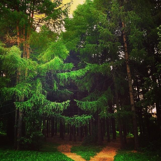 Dimanche. Un sentier à travers les bois du parc moscovite de Troparevo-Nikulino. Cet endroit est si tranquille qu'il est difficile de croire que l'immense mégalopole moscovite où fourmillent des millions de personnes rentrant à la maison après une journée de travail et où résonnent les klaxons est située à quelques pas seulement.