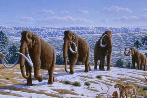 Última população de mamutes conhecida viveu na ilha de Wrangel, no Oceano Ártico, há 4 mil anos Illustração: wikipedia.org