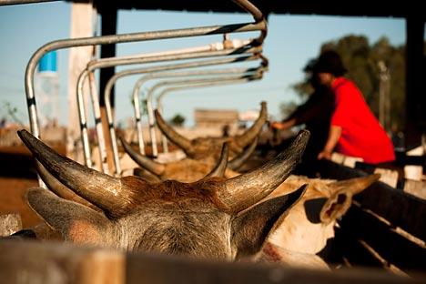 Técnicos vão avaliar garantia de qualidade de empresas interessadas em exportar carne para a União Aduaneira. Foto: Alamy_LegionMedia