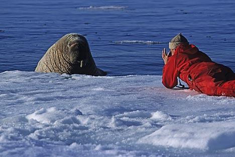A equipe de quarenta pessoas, incluindo cientistas e membros da WWF Rússia, permanecerá em águas territoriais russas no Ártico até o final deste mês. Foto: Getty Images